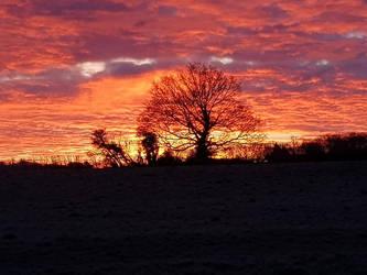 Grannysatticstock Red Sky