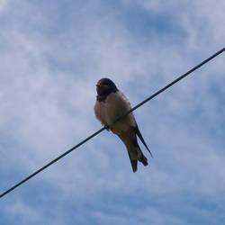 Little bird by Dimethil