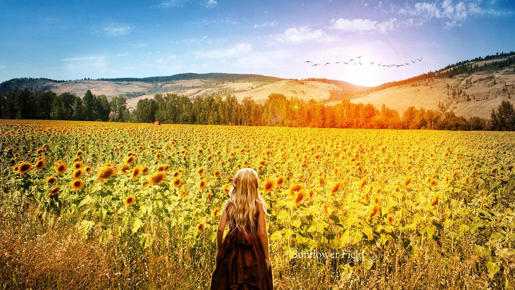 Sunflower Field by vaniapaiva