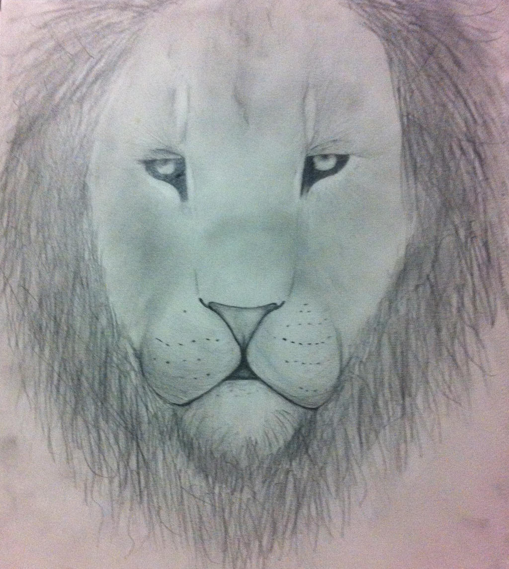 Updated Lion by squirrellover