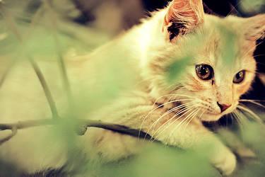 kittens part II.