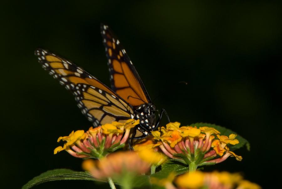 Papillon jardin botanique by Julie--Julie