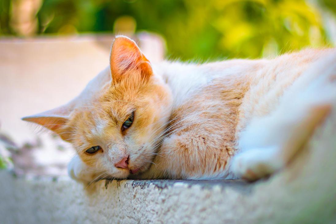 Sad cat by dali-47