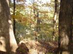 Forest Doorway II