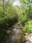 Creek in Spring II