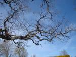Oak limbs