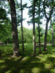 Picnic in the Trees