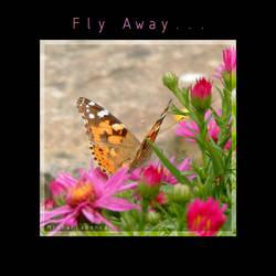 Fly Away... by MinhaFlamenca