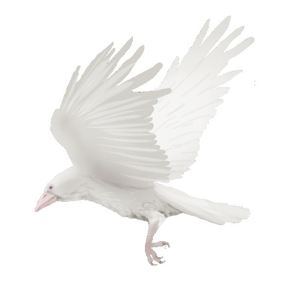 the white crow - photo #20