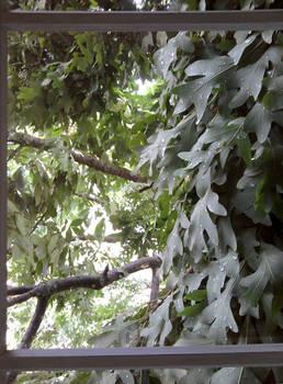 Leaves Through a Window