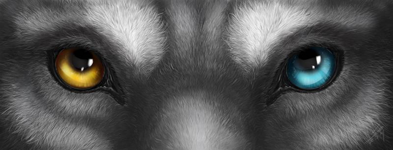 Husky eyes (Commission)