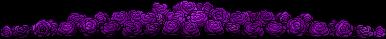Purple Roses Divider