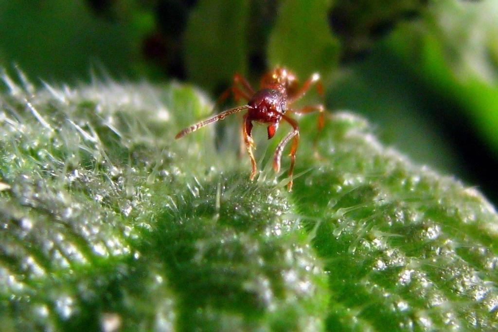 Red ant by Nadyz