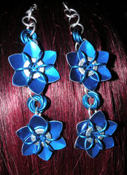 Blue Chainmail flowers
