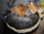 Cat's Yin Yang