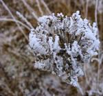Winter Sculpture_2