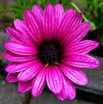 Magic Of Flower