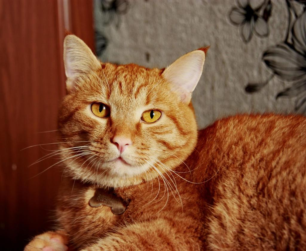 cat stock 2