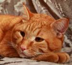 cat stock 3
