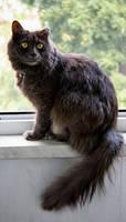 cat stock 12