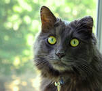 cat stock 15