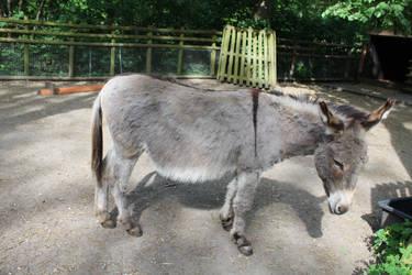 Donkey 02