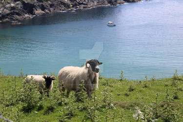 Sheeps on a cliff