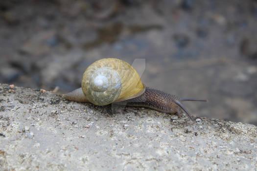 Snail (1)