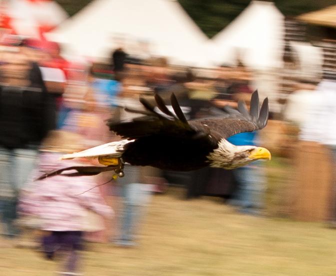 Eagle2 by Amizaras