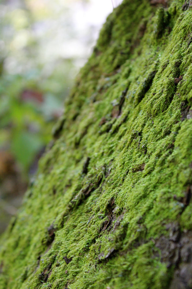 soft Green Moss by GlassHouse-1