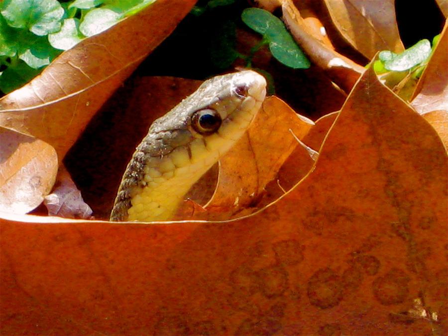 Peek-A-Boo by GlassHouse-1