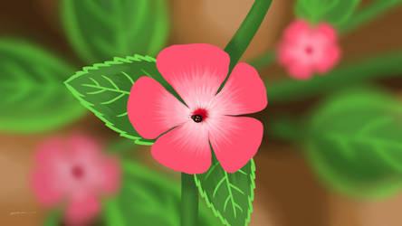 Pink Flower by mirazrahman