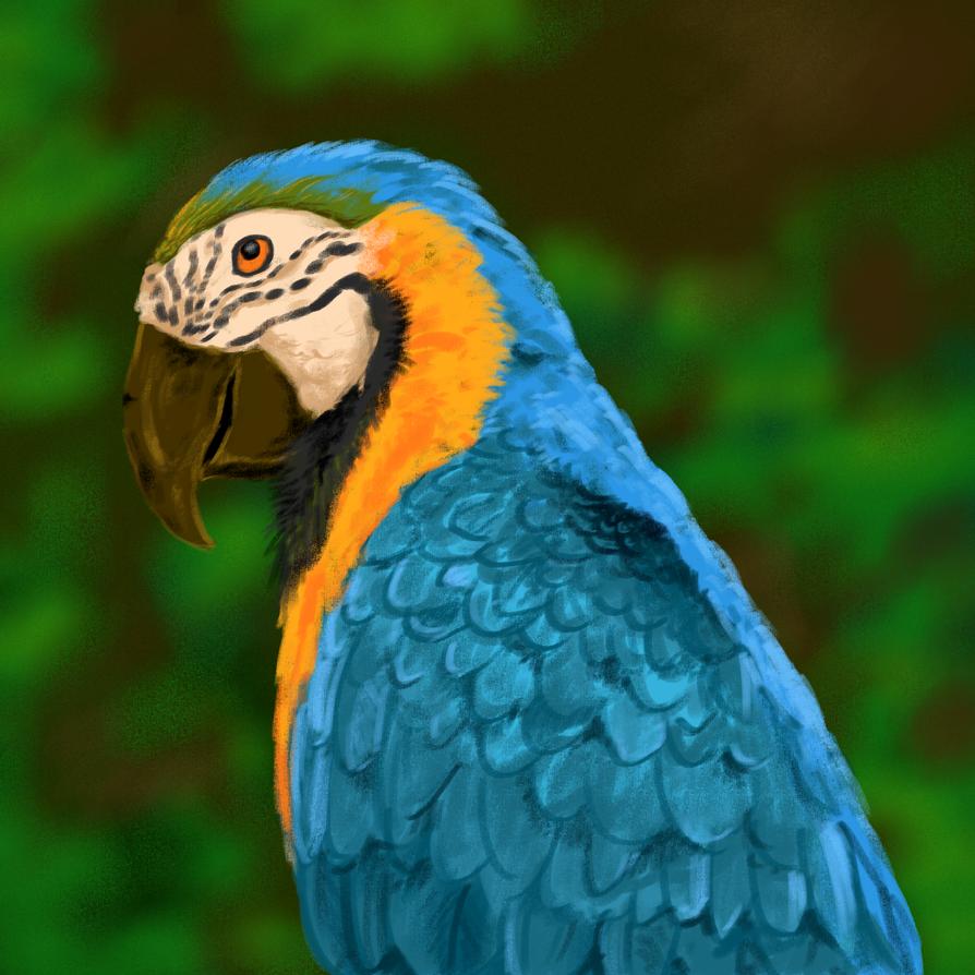 Macaw by mirazrahman