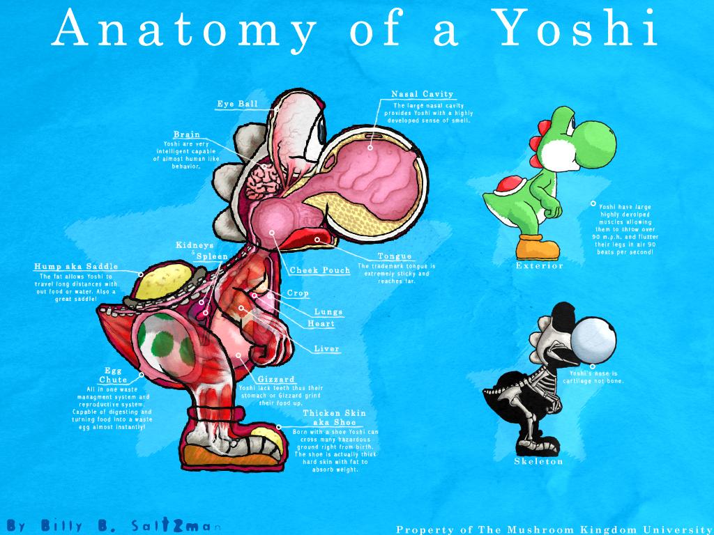 Anatomy of Yoshi by Billysan291 on DeviantArt
