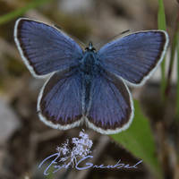 Blue as a Butterfly