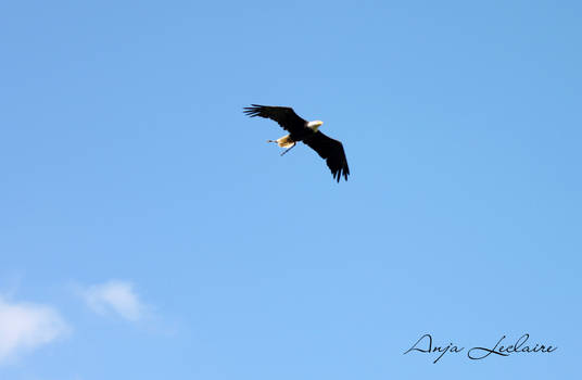 Poing Wildpark - Eagle