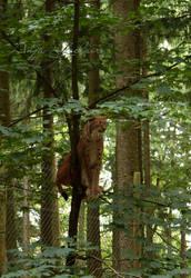 Poing Wildpark - Lynx