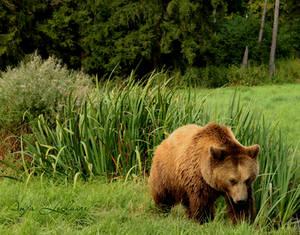Poing Wildpark - Bear
