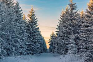 Winter Wonderland by Stefan-Becker
