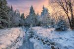 Magical Winter Wood