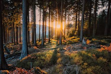 Harz Mountains, Germany by Stefan-Becker