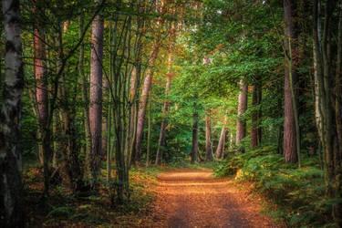 Prerow Forest by Stefan-Becker