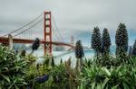 Golden Gate Bridge by Stefan-Becker