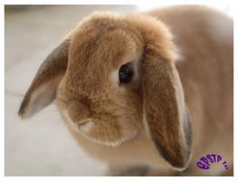 -Bunny Love- by marNsun