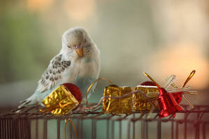 Budgie by HONEST-STYLE