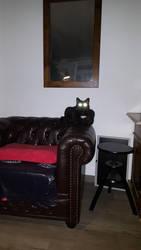 Lazercat activated. Resitance is futile. by belabeier