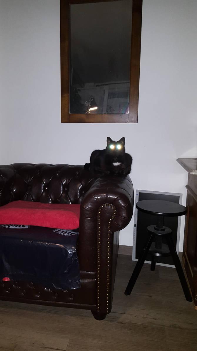 Lazercat activated. Resitance is futile.