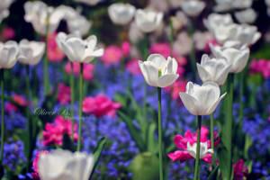 French Flower Field