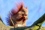 Happy Eating Squirrel
