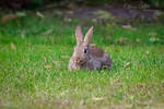Cute Rabbit by OliverBPhotography